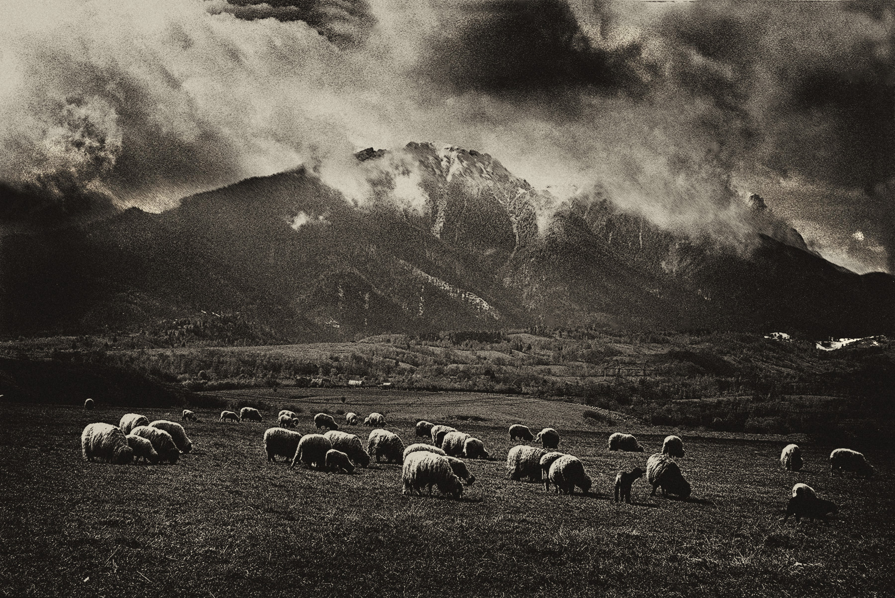romania_Sheeps_LR_