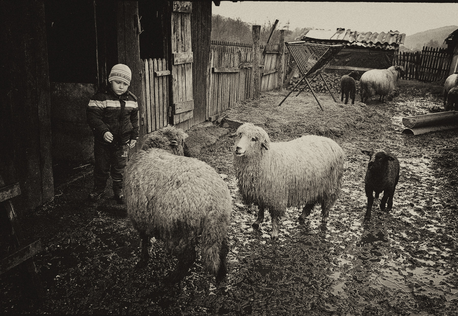 romania_boy_sheep_LR